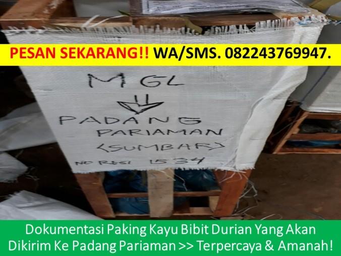 Bibit Durian Musang King Jogja, Durian Musang King, Durian Musang King Unggul, Durian Musang King Murah, Jual Bibit Durian Musang King D