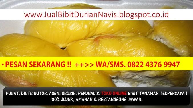 bibit buah durian musang king, Bibit Tanaman Durian Musang King Kaki Tiga Murah, Durian Musangking, Harga Bi