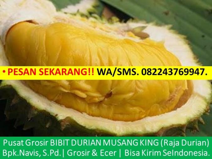 Benih Durian Musang King, Bibit Durian Musang King, Biji Durian Musang King, Anak Benih Durian Musang King, Cara Menanam Bib