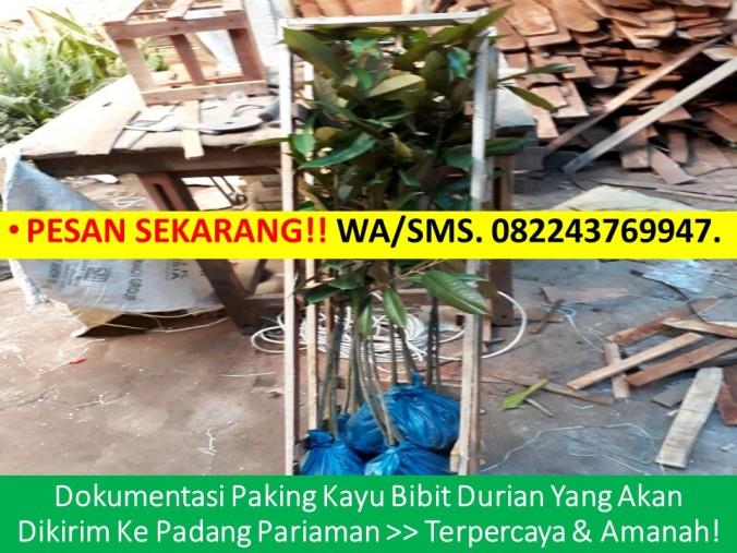 Bibit Durian Musang King Di Malaysia, Bibit Durian Musang King Di Jakarta, Pembekal Benih Durian Musang King, Beli Benih Durian Musang K