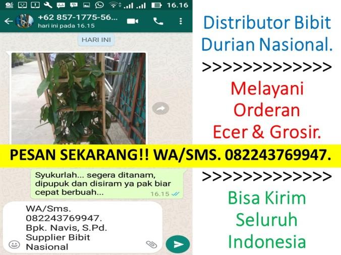 Bibit Durian Musang King Jogja, Jual Bibit Durian Musang King, Harga Anak Benih Durian Musang King, Jual Bibit Durian Musang King Jakart